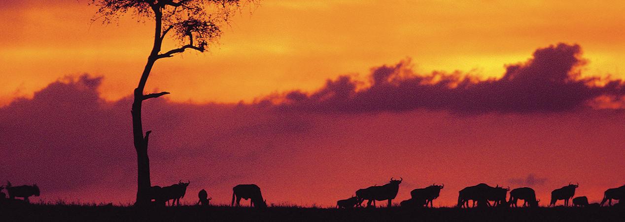 KENYA SAFARI. Escursioni in Kenya